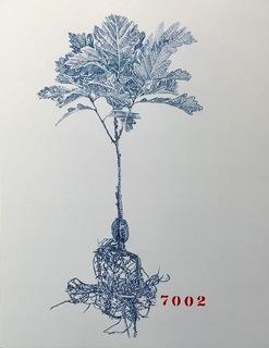 08 BEUYS 7000 OAKS, KASSEL 2018